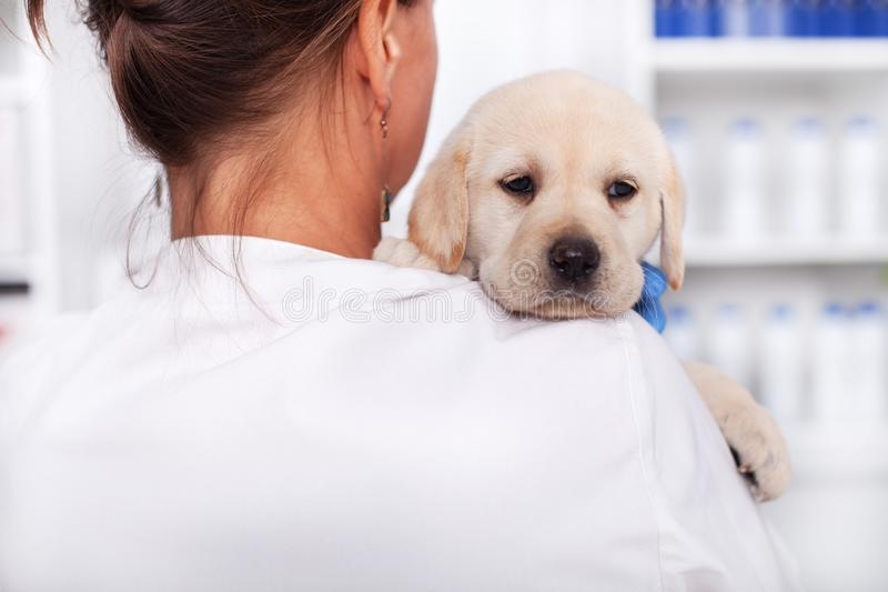 Weterynaryjna lekarka lub opieki zdrowotnej fachowego mienia szczeniaka śliczny pies zdjęcie royalty free