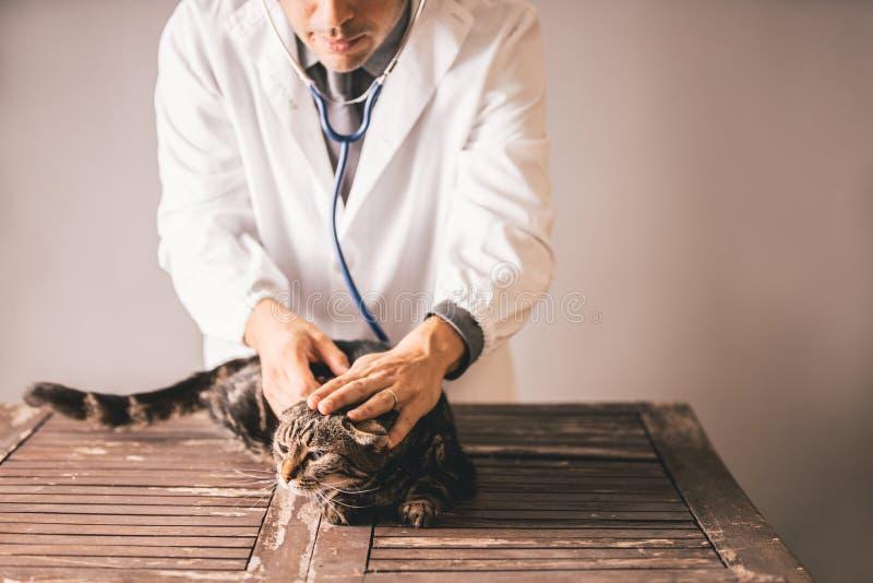 Weterynaryjna lekarka z stetoskopem wokoło jego szyi trzyma czarnego kota i ono uśmiecha się fotografia stock