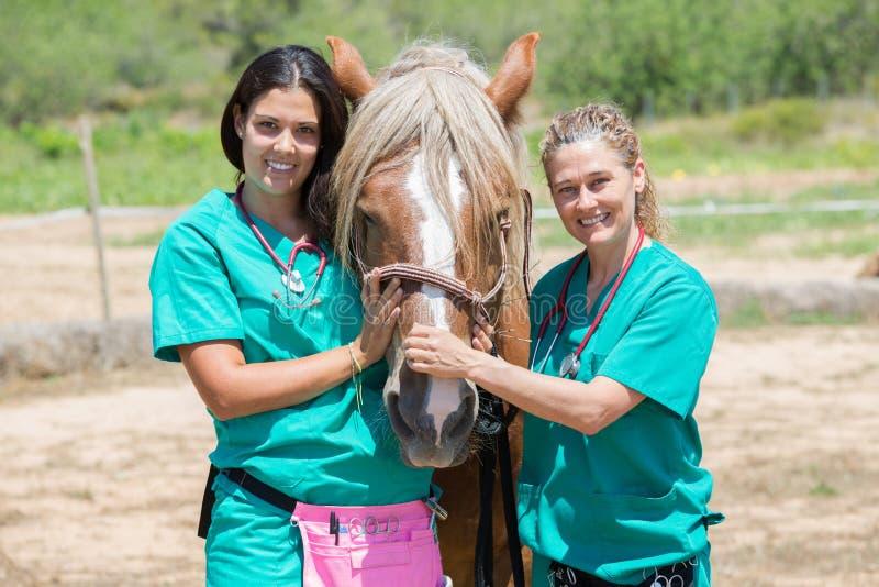 Weterynaryjni konie na gospodarstwie rolnym obraz royalty free