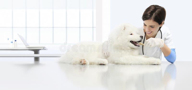 Weterynaryjny egzaminu pies, uśmiechnięty weterynarz z kibble suchego zdjęcie royalty free