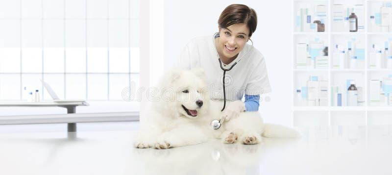 Weterynaryjny egzaminu pies, uśmiechnięty weterynarz z stethoscop obrazy stock
