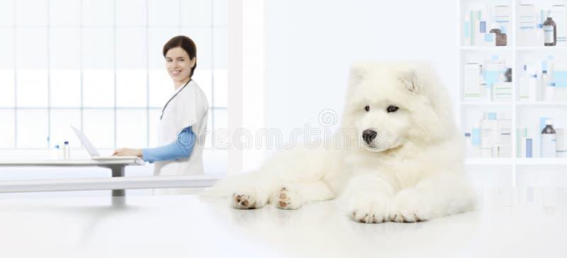 Weterynaryjny egzaminu pies, weterynarz z komputerem na stole zdjęcie stock