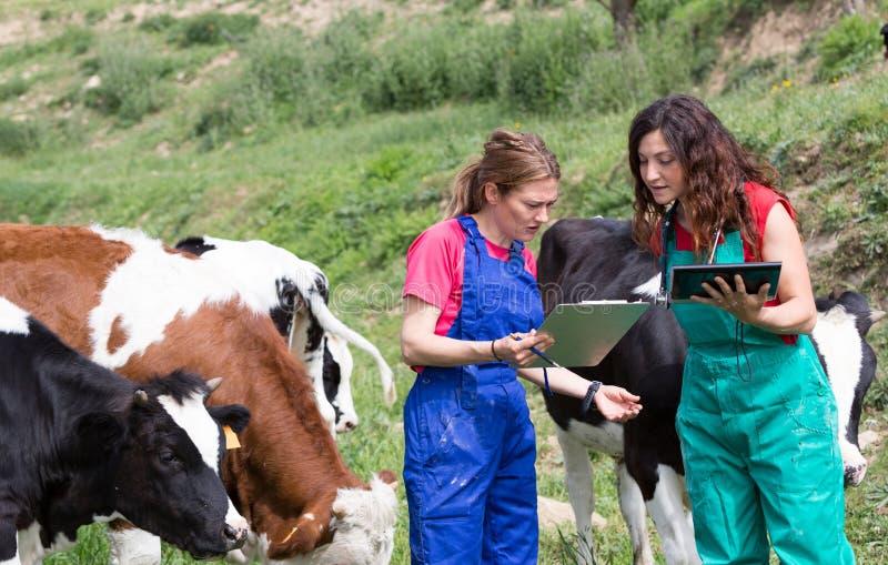 Weterynaryjny na gospodarstwie rolnym fotografia royalty free