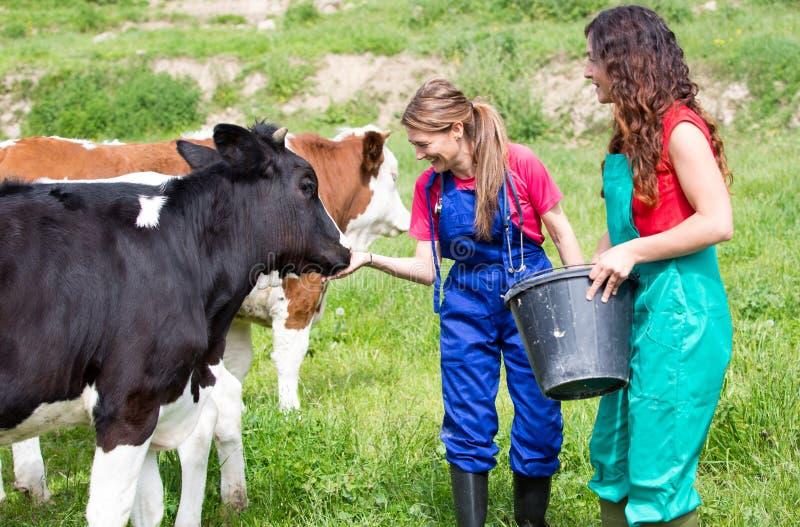 Weterynaryjny na gospodarstwie rolnym obraz stock