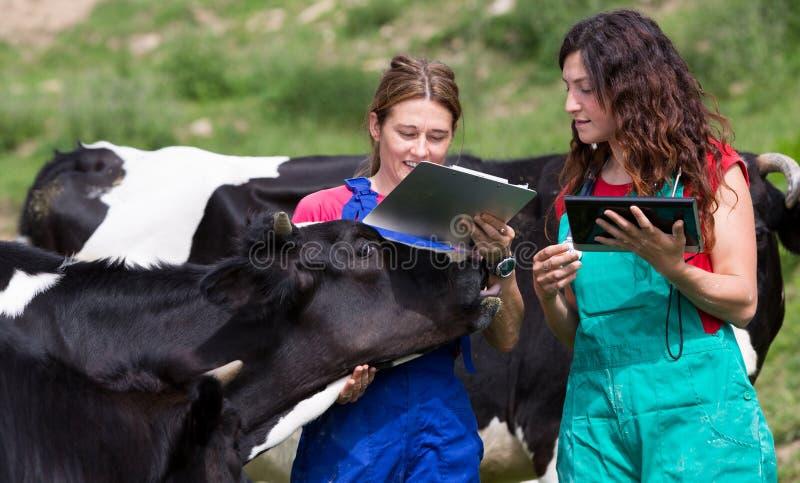 Weterynaryjny na gospodarstwie rolnym obraz royalty free