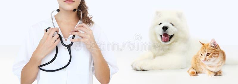 Weterynaryjny opieki pojęcie weterynarz z stetoskopem, pies i zdjęcia royalty free