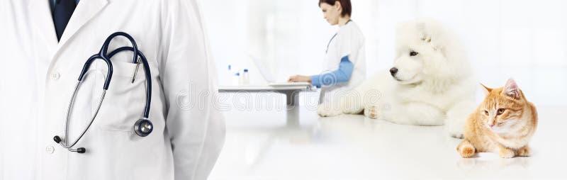 Weterynaryjny z stetoskopem w kieszeni, pies i kot, weterynarz kliniki b obraz royalty free