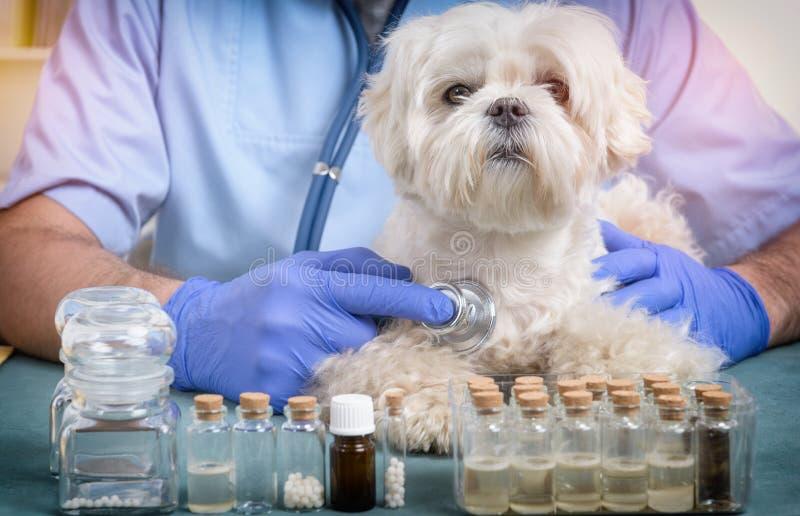 Weterynarz sprawdza psa z stetoskopem obraz stock