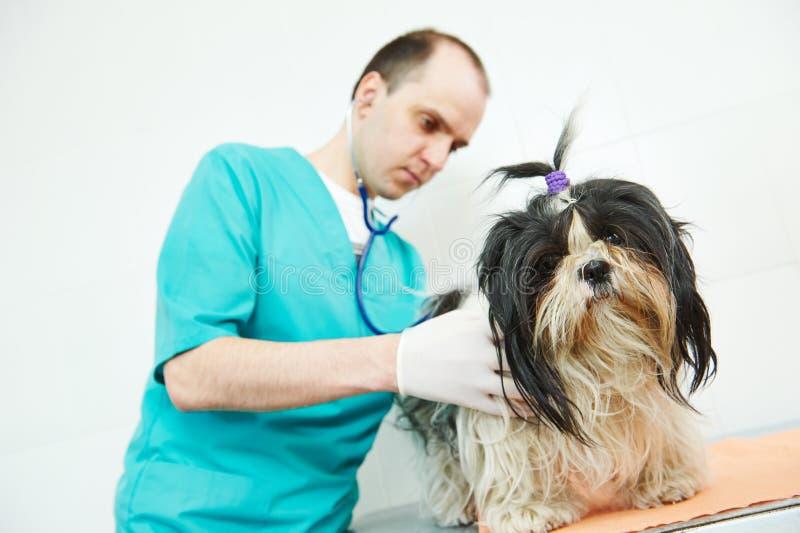 Weterynarza chirurga częstowania pies obraz royalty free