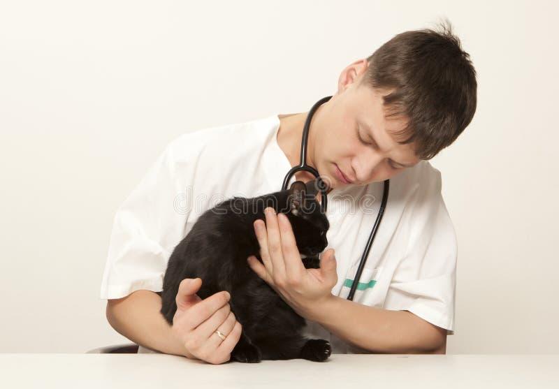 Weterynarza chirurga kot i lekarka zdjęcia royalty free