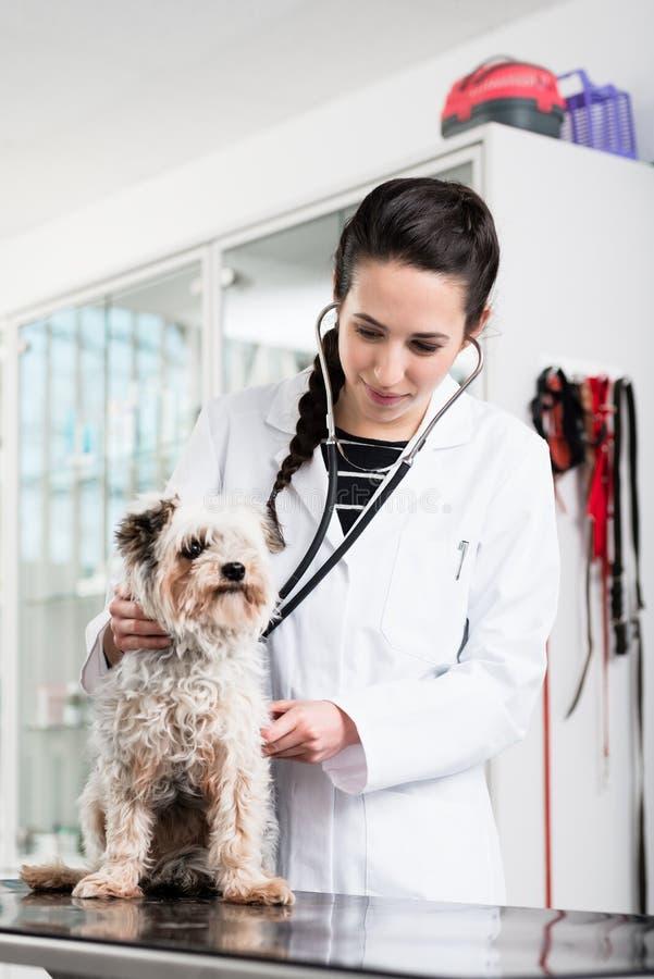 Weterynarza specjalista egzamininuje choroba psa zdjęcie stock