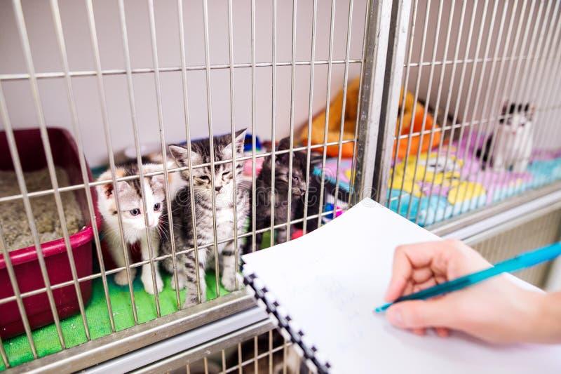 Weterynarza writing w notepad o kotach w klatce zdjęcia royalty free