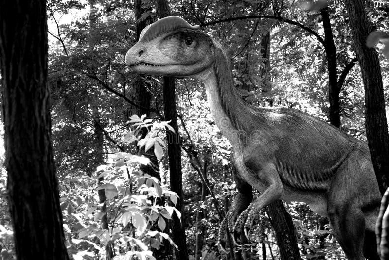 wetherilli dilophosaurus στοκ εικόνες με δικαίωμα ελεύθερης χρήσης