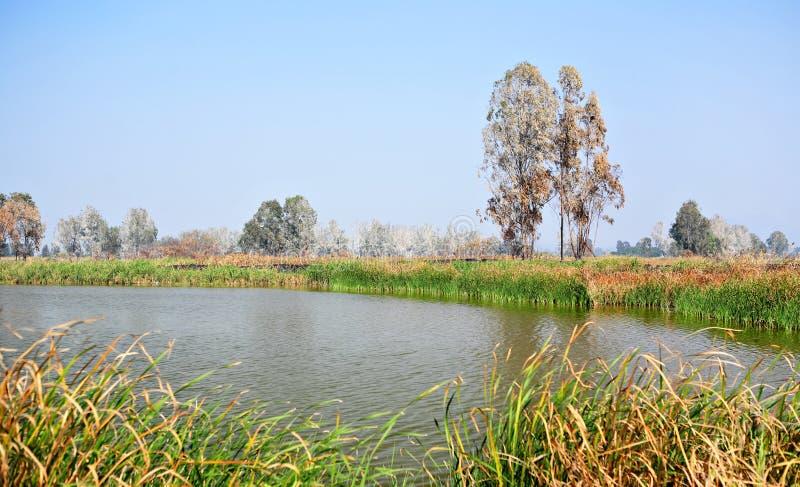 Wetland royalty free stock photos