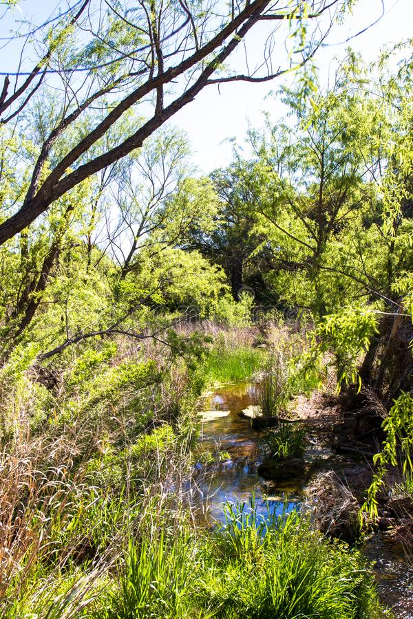 Wetland at Enchanted Rock State Natural Area in Texas. Wetland in spring along Sandy Creek at Enchanted Rock State Natural Area near Fredericksburg, Texas royalty free stock photos