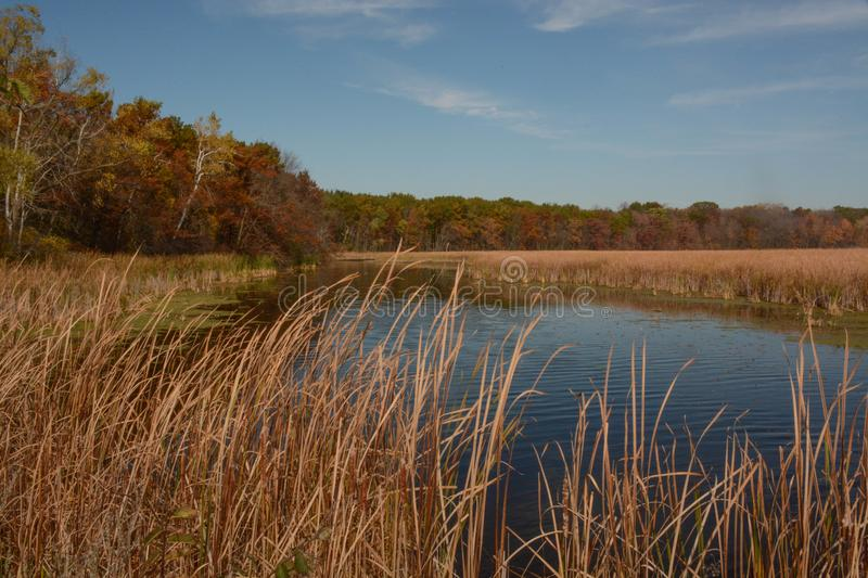 Wetland Area. A wetland area in the Kettle Moraine area in south central Wisconsin stock photo