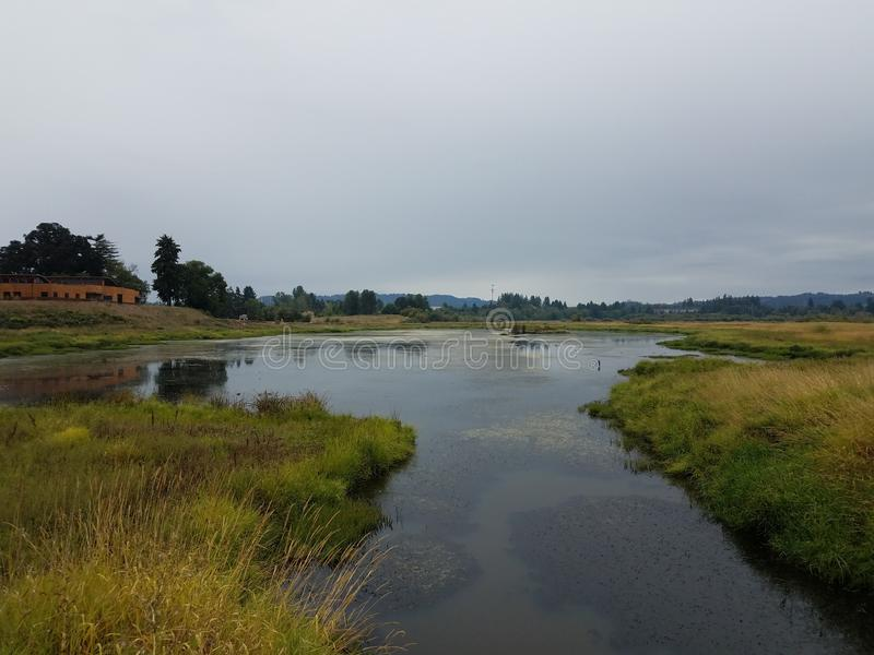 Wetland area lake or pond water and grasses. Environment stock photos