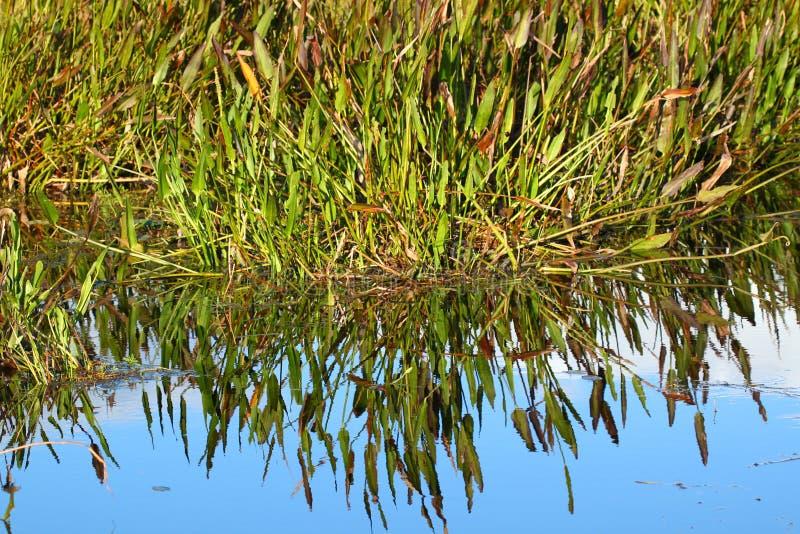 Wetland Background Scenery royalty free stock photography