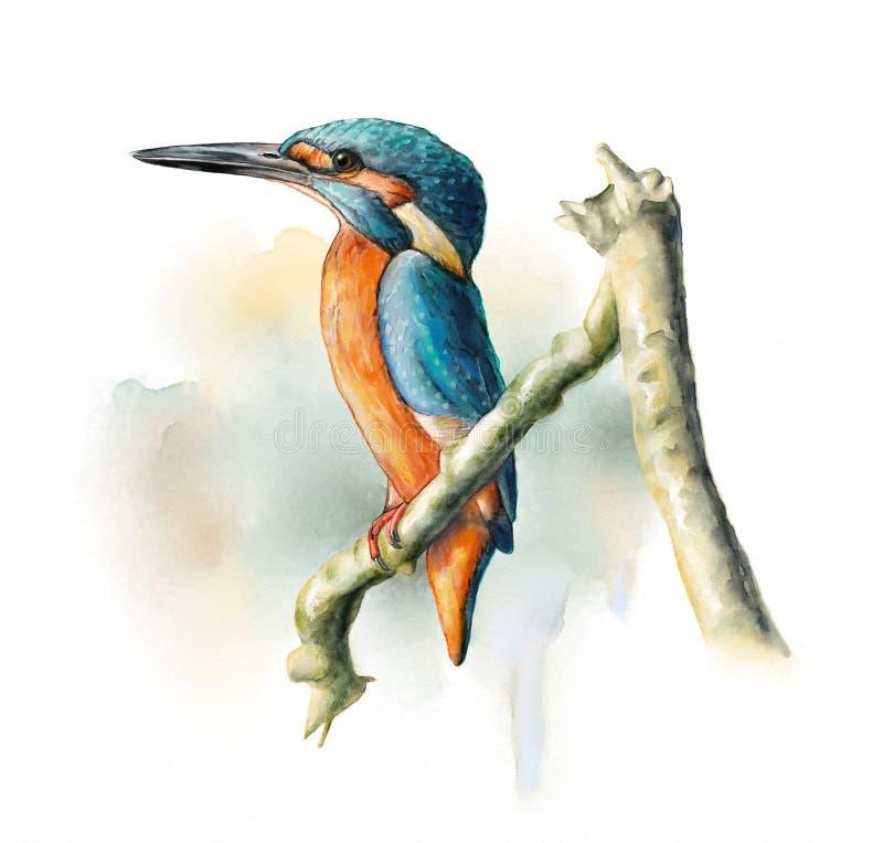 Wetland birds, King Fisher stock illustration