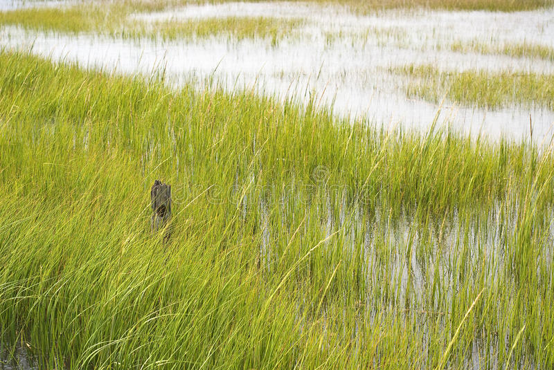 Download Wetland Conservation stock photo. Image of assateague - 15939850