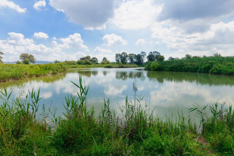 Wetland, En Afek. Wetland landscape, in En Afek Nature Reserve, northern Israel stock photo