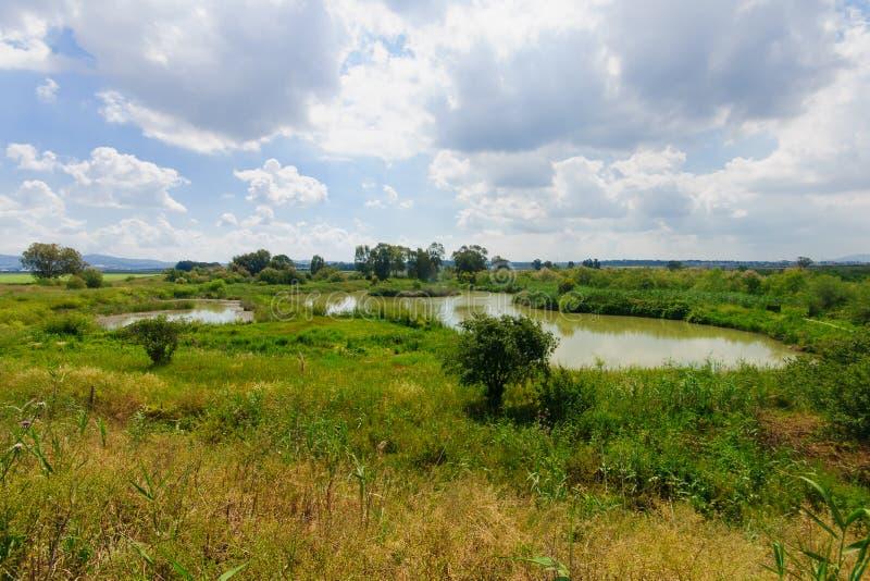 Wetland, En Afek. Wetland landscape, in En Afek Nature Reserve, northern Israel stock image