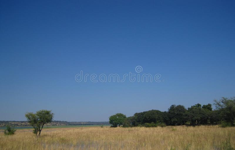 WETLAND IN FLOODED AREA OF CHOBE RIVER. View of wetland area depicting long green grass and a distant treeline against a blue sky with white clouds royalty free stock photo