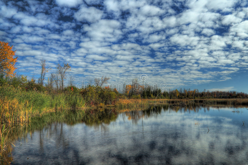 Wetland in HDR royalty free stock photos