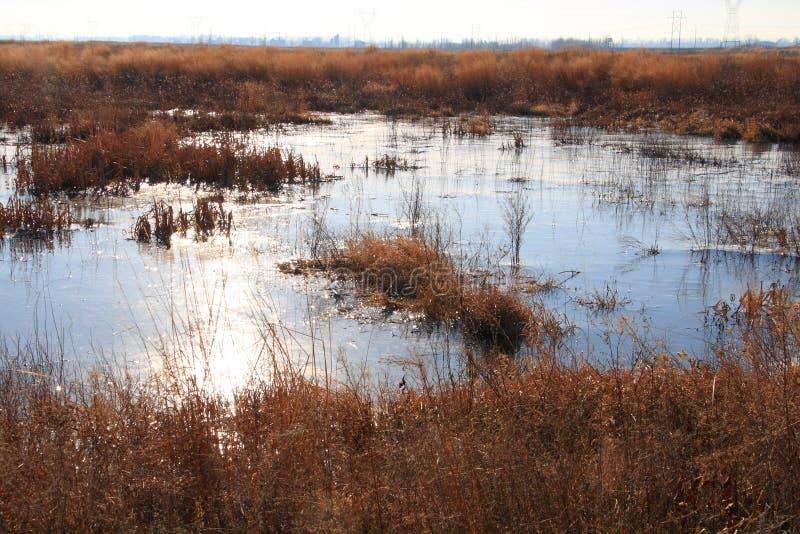 Wetland landscape royalty free stock images