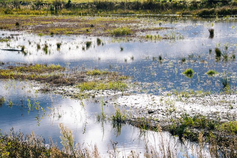 Wetland. Landscape with a view of the swamp royalty free stock images