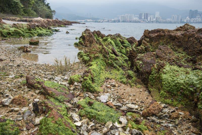 Wetland lichen royalty free stock image