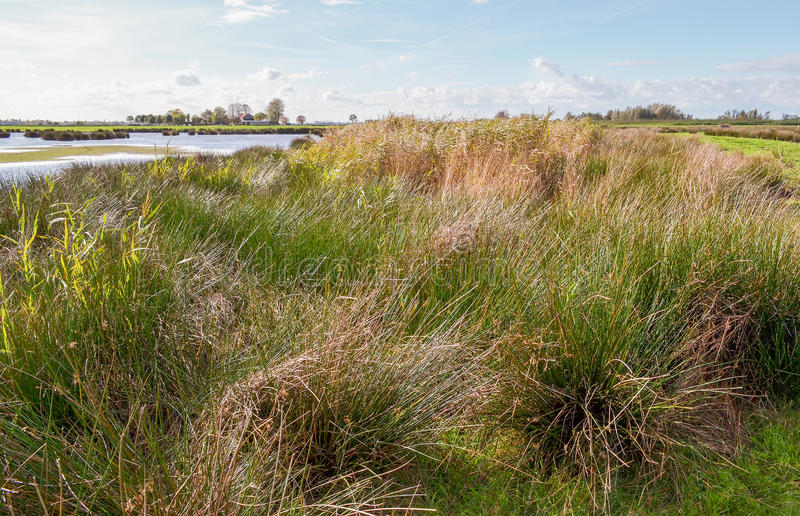 Wetland. Wetland nature reserve the Green Jonker, near by the Nieuwkoopse Plassen. A natural monuments near the village of North in the Netherlands stock images