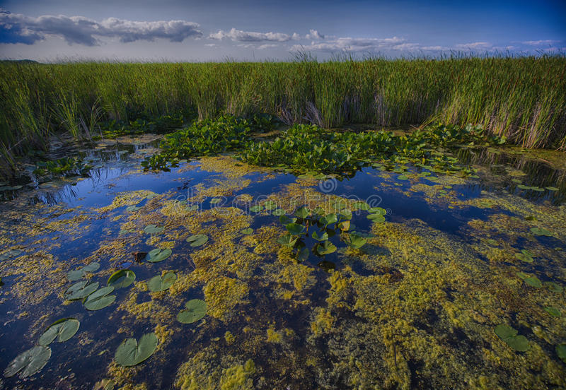 Wetland - Point Pelee conservation area. Wetland landscape on Point Pelee conservation area in Ontario, Canada stock photo
