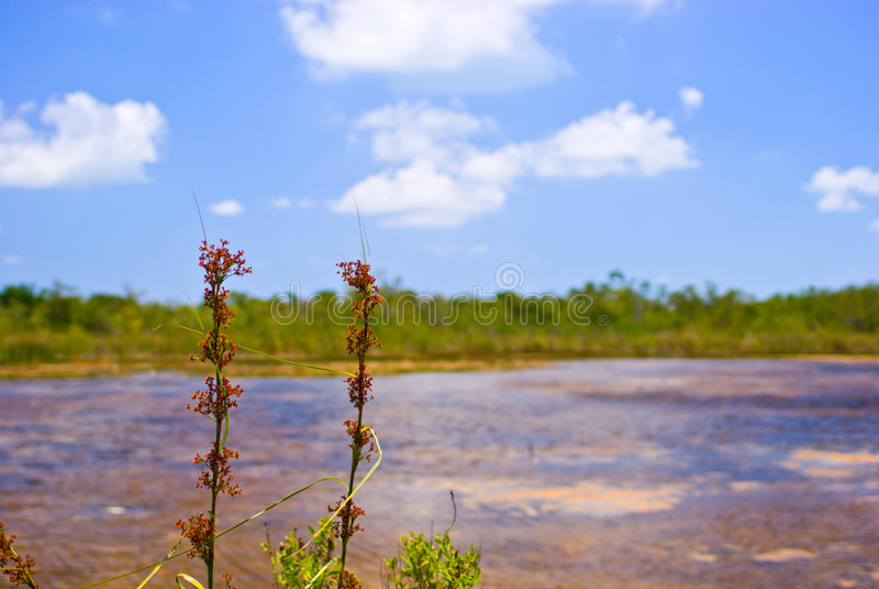 Wetland Pond royalty free stock photos