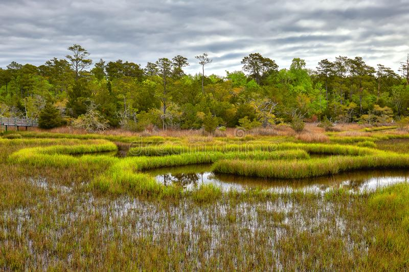 Wetland Scenery near Emerald Isle, North Carolina. Scenic wetlands along the Cedar Point-Tideland boardwalk foot trail in the Croatan National Forest near royalty free stock photos