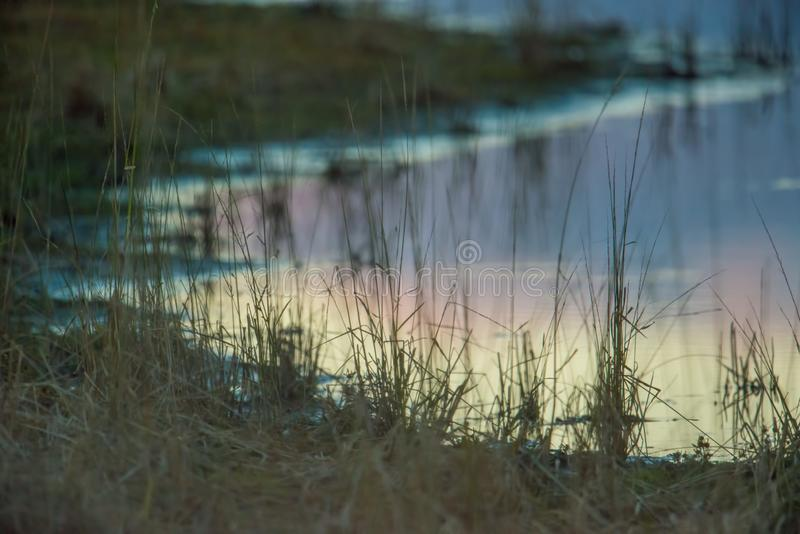 Wetland shoreline at dusk / early evening with blue, purple, orange cloudy sky reflected on the calm lake shoreline waters in the. Grasslands / prairie of the royalty free stock image