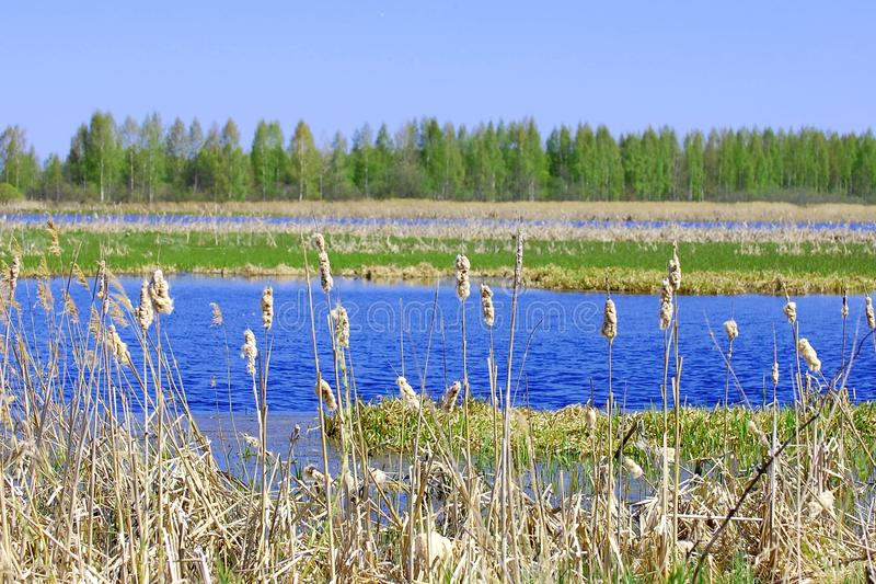 Wetland in a sunny day stock photo