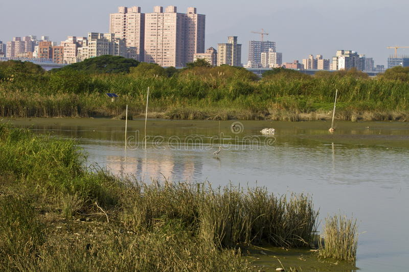 Wetland and swamp. Scenery of natural wilderness in Taipei,wetland and swamp stock photos