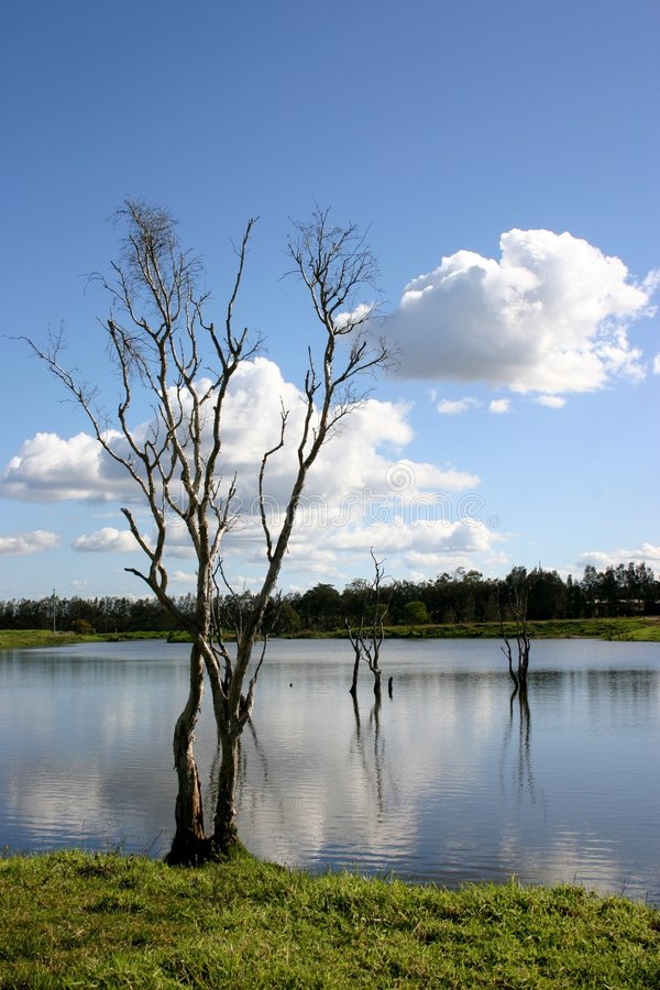 Download Wetland Tree Stock Image - Image: 191061