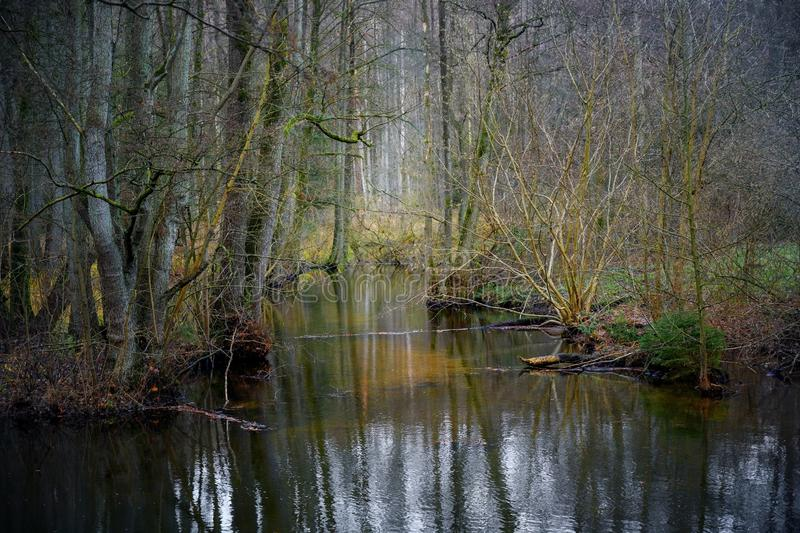 Wetland with water, bare trees and bushes winter at the Hellbach or Pinnau valley near Mölln, Germany, landscape scenery in royalty free stock photos