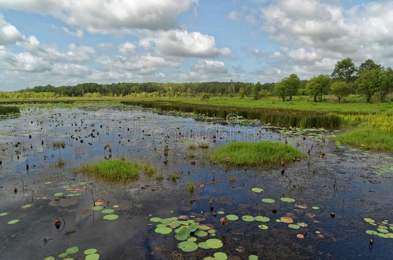 Wetlands With Lily Pads Floating. A wetland waterway with floating lily pads in Northern Australia royalty free stock photos