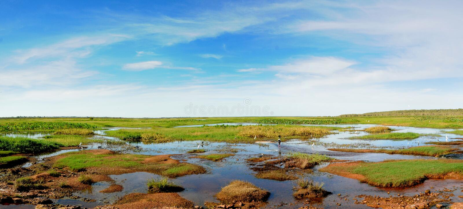 Wetlands royalty free stock image