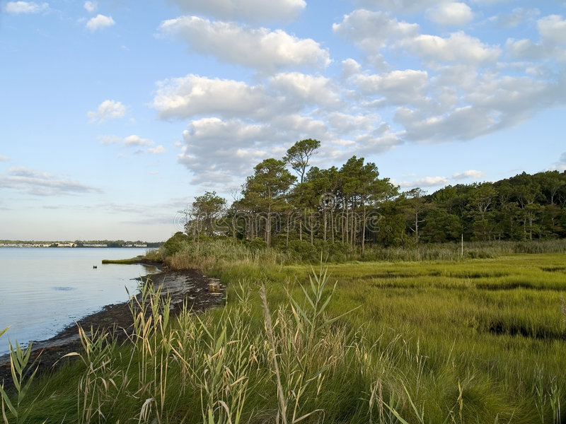 Download Wetlands stock photo. Image of wetlands, ocean, river - 3095820