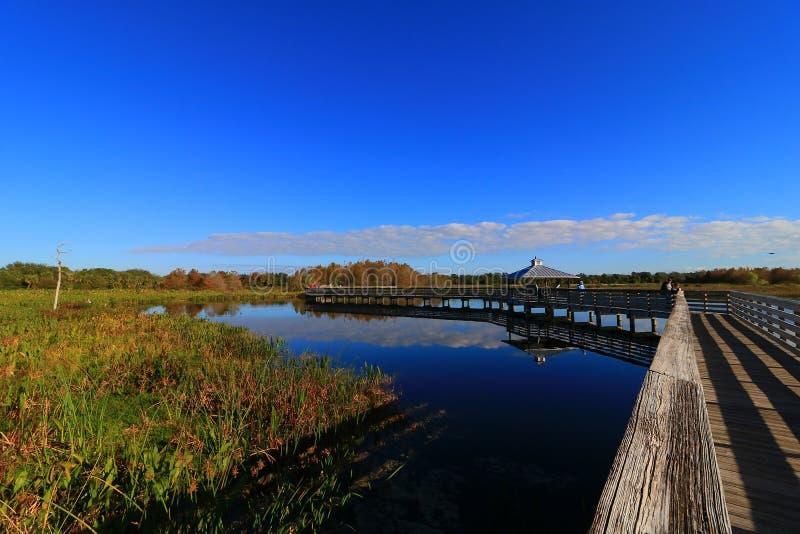 wetlands immagine stock