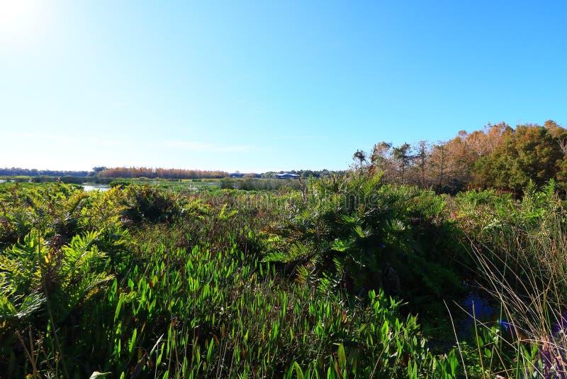 wetlands fotografie stock libere da diritti