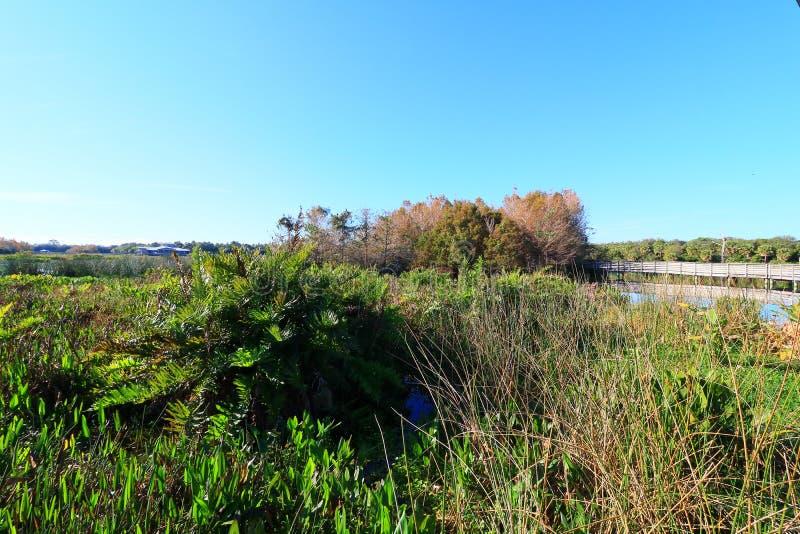 wetlands fotografia stock