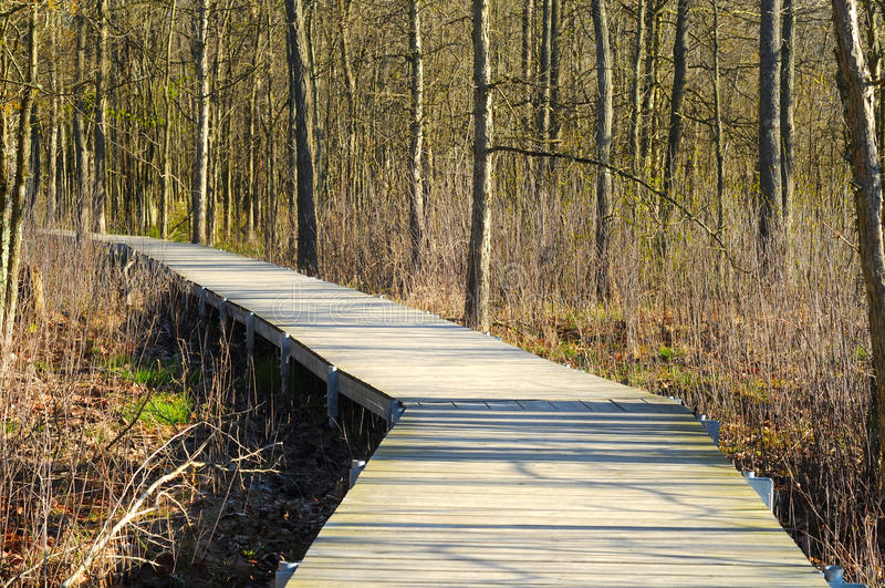Wetlands Boardwalk Stock Photo