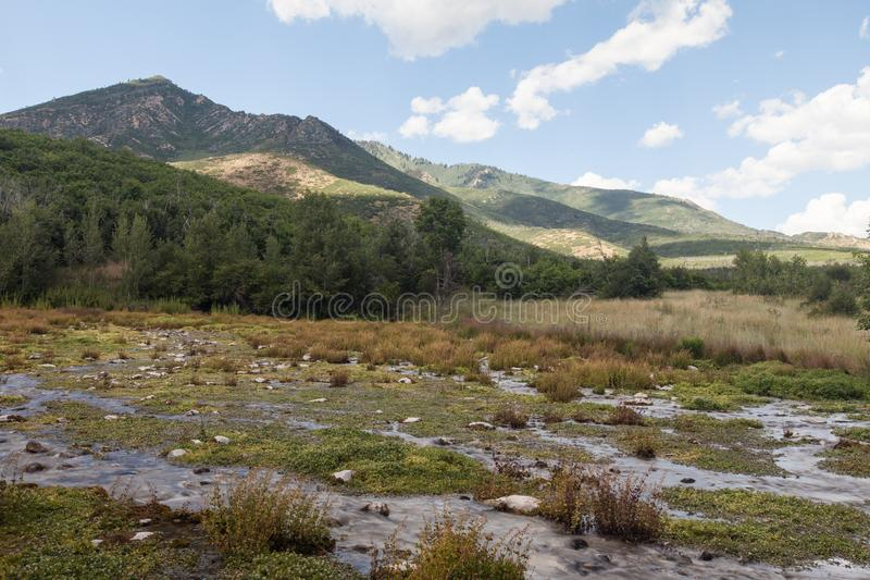 American Fork Canyon wetlands. Wetlands at Cascade Springs National Park, American Fork Canyon stock photos