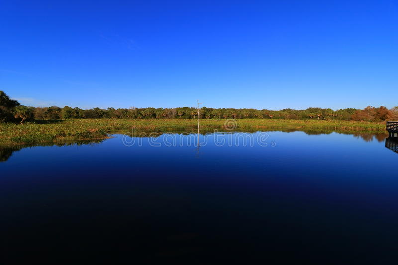 Wetlands. In Delray beach, Florida, Palm beach royalty free stock image