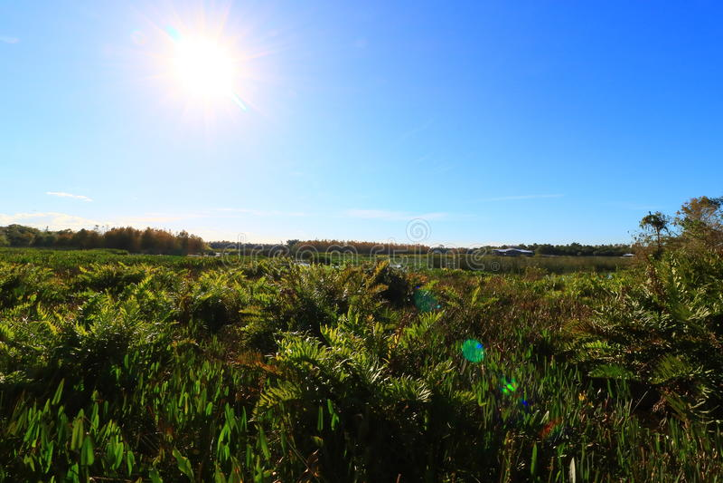 Wetlands. In Delray beach, Florida, Palm beach stock photos